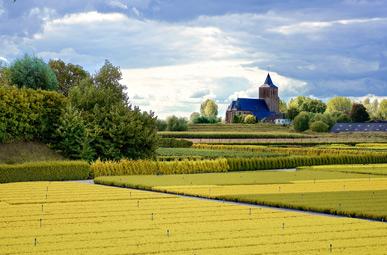 Ausblick über die Felder bei Zevenaar auf der Oranier-Fahrradroute